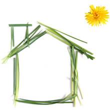 Co zmienić w swoim domu, by chronić środowisko?