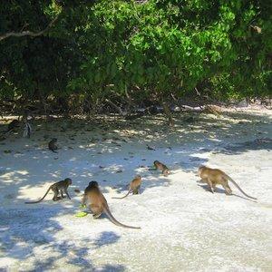 Wyspa Małp