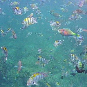 Nurkowanie na Phi Phi