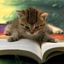 Sposoby na wychowanie kota