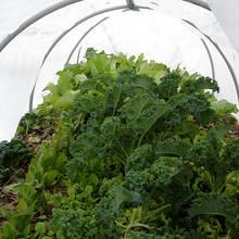 Jak wykonać ogrodowy tunel z rur PCV i folii?