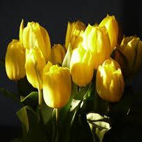 Jak ze sztucznych tulipanów zrobić wiązankę na grób?