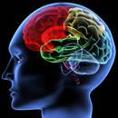 Które produkty spożywcze źle wpływają na pracę mózgu?
