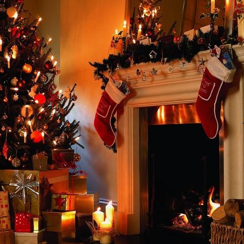 Jakich roślin nie powinno zabraknąć w domu w Boże Narodzenie?