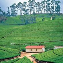 Ciekawostki turystyczne na Sri Lance