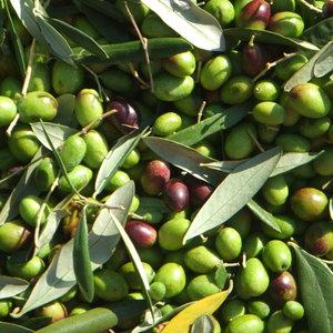 Oliwa z oliwek jako kosmetyk
