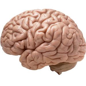 Jak poprawić działanie mózgu?