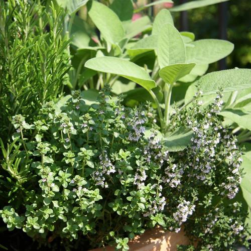 W jaki sposób przechowywać zioła?