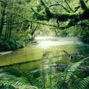 Jak poradzić sobie w lesie?