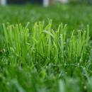W jaki sposób usunąć plamy z trawy?