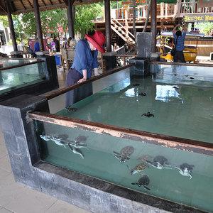 Rezerwat żółwi