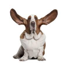 Jak być osobą, która potrafi słuchać?