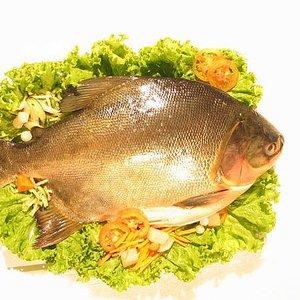 Skuteczne ryby