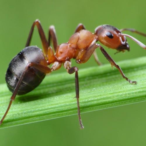 Jak sobie poradzić z mrówkami w ogrodzie?