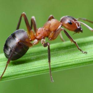 problem z mrowkami