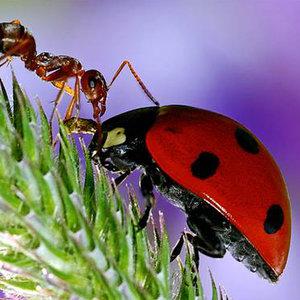 Dlaczego mrówki w ogrodzie są szkodnikami?
