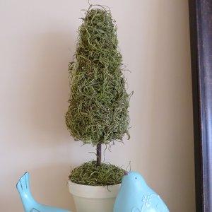 Jak zrobić drzewko z mchu?