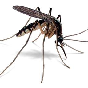 Jak sobie poradzić z komarami?