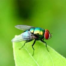 Jak usunąć muchy z domu?