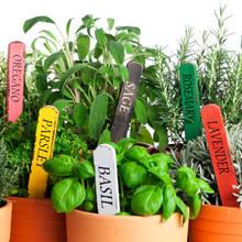 Jakie zioła pomagają zwalczyć trądzik?