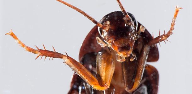 Jak pozbyć się karaluchów z mieszkania?