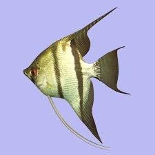 Jakie rybki?