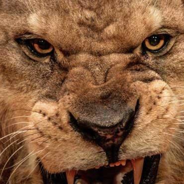 Jak odpowiadać na agresję?