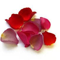 Różany tonik dla wszystkich
