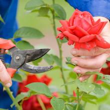 Jak można przechować cięte kwiaty?