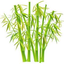 Jak dbać o bambusa?