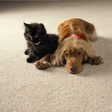 Jak skutecznie oczyścić dywan z sierści?