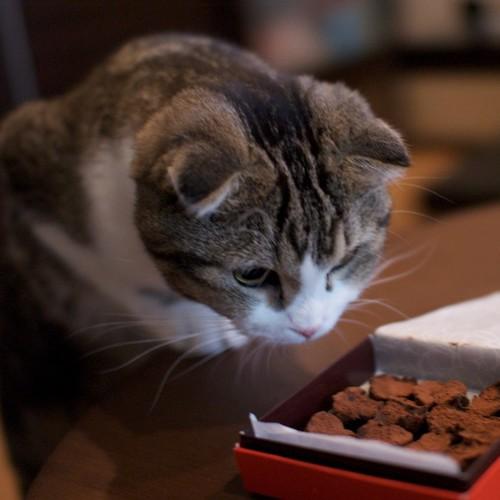 Które pokarmy są szkodliwe dla kotów?