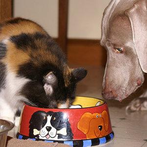 Co nie może być podstawą diety kota
