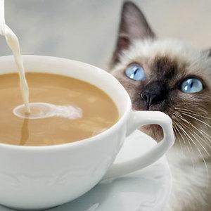 Czekolada, kawa i herbata