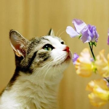 Które rośliny są niebezpieczne dla kotów?