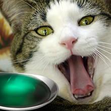 Jak należy podawać kotu lekarstwa?