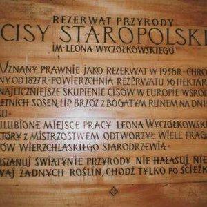 Rezerwat Cisów