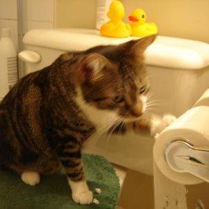 W jaki sposób wymierzyć kotu karę?