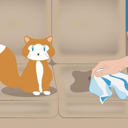 Jak usunąć zapach kociego moczu z kanapy?