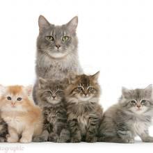 Jak nauczyć kota korzystania z kuwety?