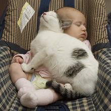 Jak przyzwyczaić psa i kota do noworodka?