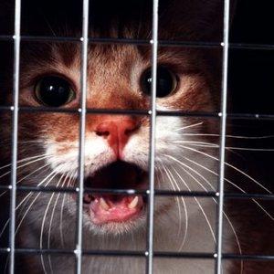 Kot nie musi się bać