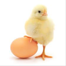 Domowe kosmetyki z jajek