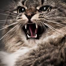 Jak oswoić kota z ludźmi?