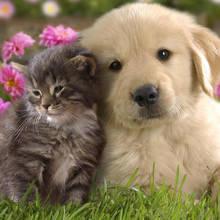 Jak oswoić kota z psem?