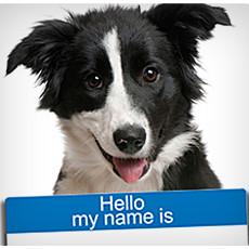 Jak wybrać odpowiednie imię dla psa?