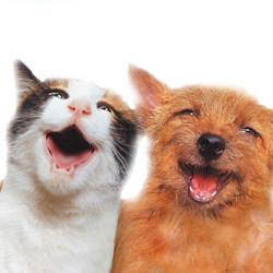 Dlaczego koty są lepsze od psów?