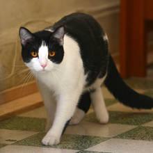 Jak zwalczyć łupież u kota?