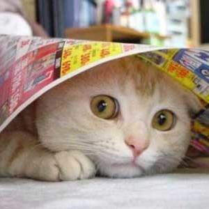 Jak poradzić sobie ze zestresowanym kotem?