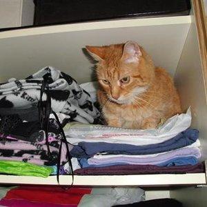 Zapewnij kotu bezpieczny schowek